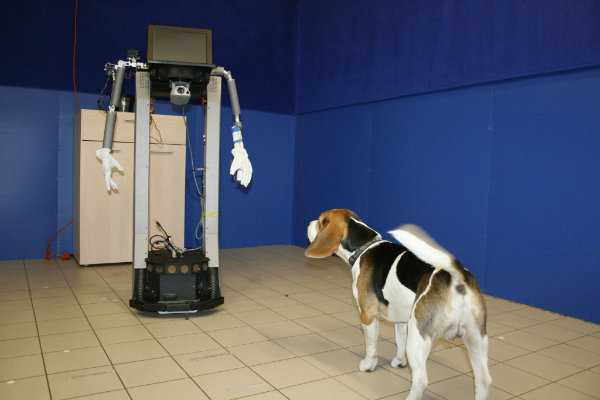 robot and dog
