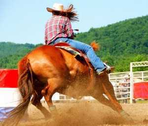 Horse Racing in Takanini