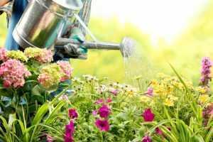 Garden Designers in Kent