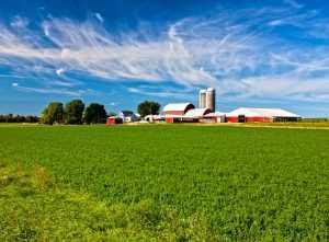 Barns in a Farm