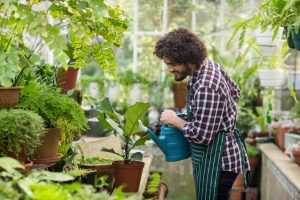 Man busy watering his plants in the garden