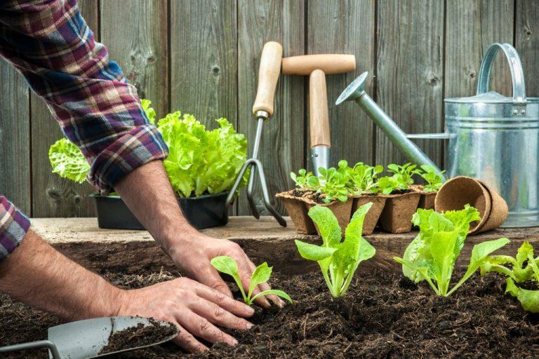 man planting on backyard garden