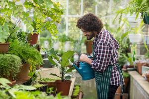 Man watering the plants in a greenhouse