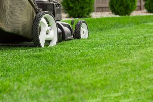 Lawn mower on a green lawn