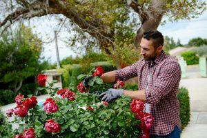 Man gardening his plants
