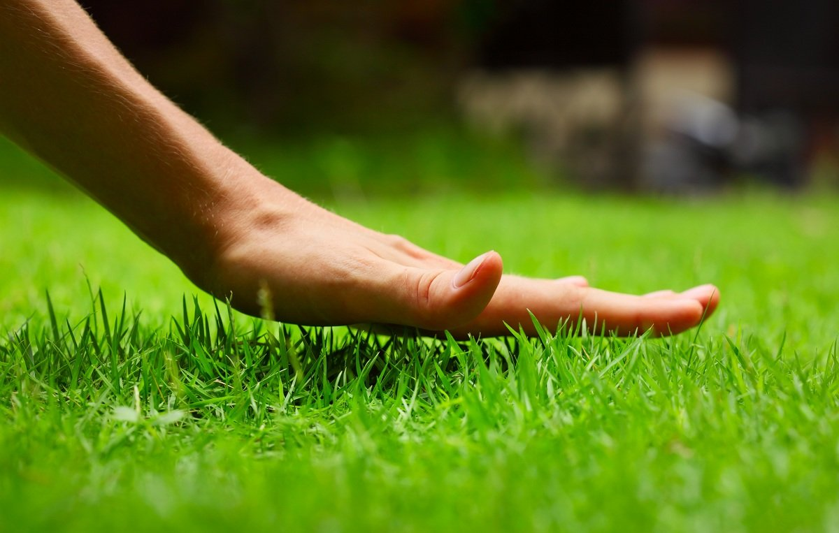 Types of Grass to Plant in Your Lawn
