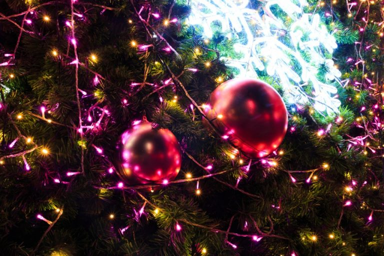 Christmas lights hanging in a tree on chrismas day