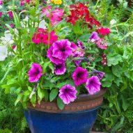 plant inside of planter